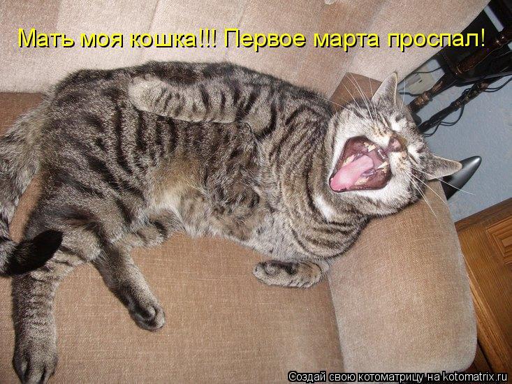 Котоматрица: Мать моя кошка!!! Первое марта проспал!