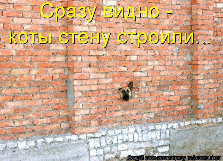 Котоматрица: Сразу видно -  коты стену строили...