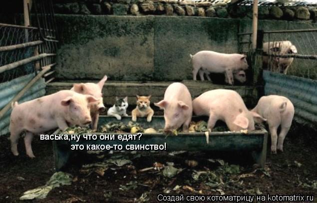 Котоматрица: васька,ну что они едят? это какое-то свинство!