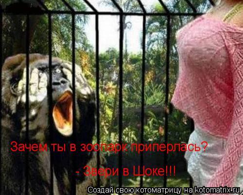 Котоматрица: Зачем ты в зоопарк приперлась? - Звери в Шоке!!!