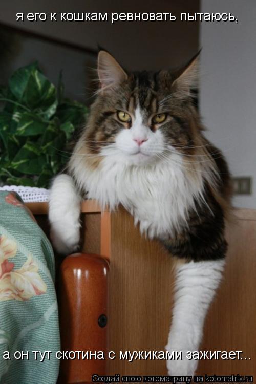 Котоматрица: я его к кошкам ревновать пытаюсь,  а он тут скотина с мужиками зажигает...