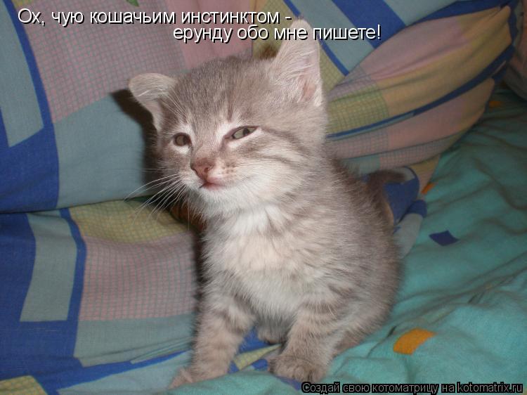 Котоматрица: Ох, чую кошачьим инстинктом -  ерунду обо мне пишете!