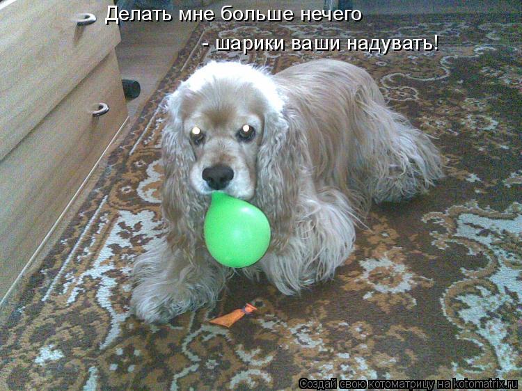 Котоматрица: Делать мне больше нечего - шарики ваши надувать!