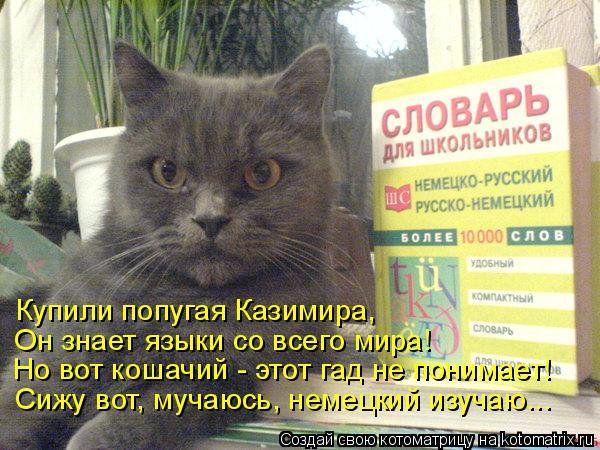 Котоматрица: Купили попугая Казимира,  Но вот кошачий - этот гад не понимает!  Он знает языки со всего мира!  Сижу вот, мучаюсь, немецкий изучаю...