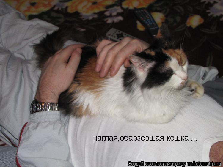 Котоматрица: наглая,обарзевшая кошка ...