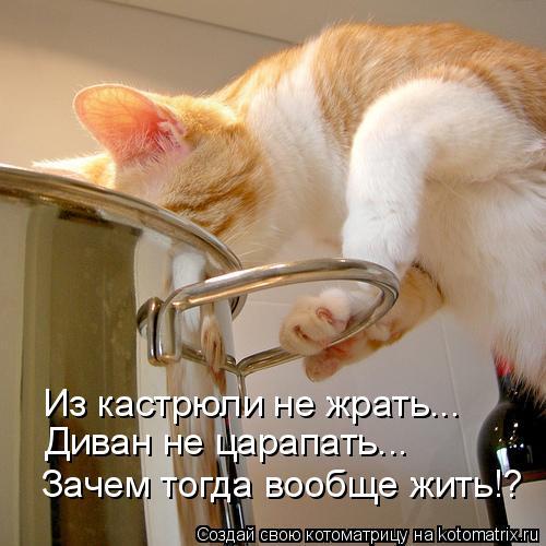 Котоматрица: Из кастрюли не жрать... Диван не царапать... Зачем тогда вообще жить!?