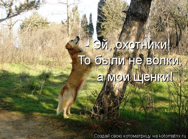 Котоматрица: - Эй, охотники! То были не волки,  а мои щенки!