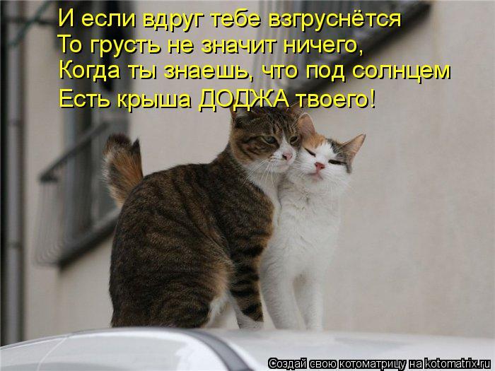 Котоматрица: И если вдруг тебе взгруснётся То грусть не значит ничего, Когда ты знаешь, что под солнцем Есть крыша ДОДЖА твоего!