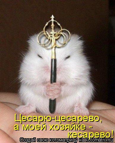 Котоматрица: Цесарю-цесарево, а моей хозяйке -  кесарево!