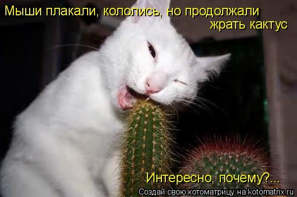 Котоматрица: Мыши плакали, кололись, но продолжали жрать кактус Интересно, почему?...