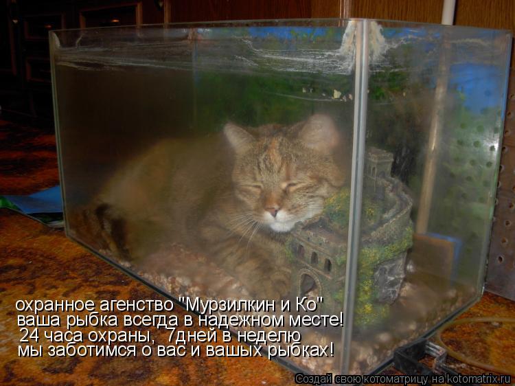 """Котоматрица: охранное агенство """"Мурзилкин и Ко""""  ваша рыбка всегда в надежном месте!  24 часа охраны,  7дней в неделю мы заботимся о вас и вашых рыбках!"""