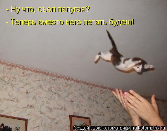 Котоматрица: - Ну что, съел папугая? - Теперь вместо него летать будеш!