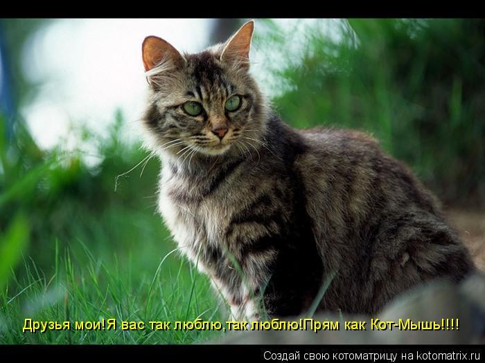 Котоматрица: Друзья мои!Я вас так люблю,так люблю!Прям как Кот-Мышь!!!!
