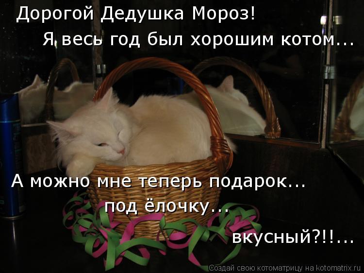 Котоматрица: Дорогой Дедушка Мороз! Я весь год был хорошим котом... А можно мне теперь подарок... под ёлочку... вкусный?!!...
