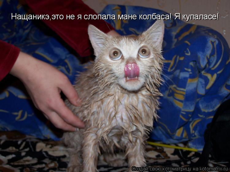 Котоматрица: Нащаникэ,это не я слопала мане колбаса! Я купаласе!