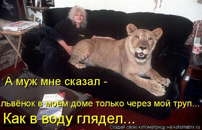 Котоматрица: А муж мне сказал -  львёнок в моём доме только через мой труп... Как в воду глядел...