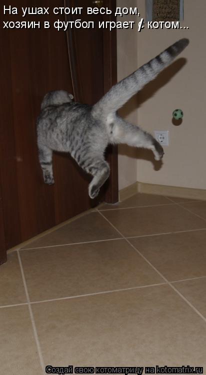 Котоматрица: На ушах стоит весь дом, хозяин в футбол играет с котом... /