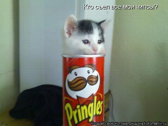 Котоматрица: Кто съел все мои чипсы?