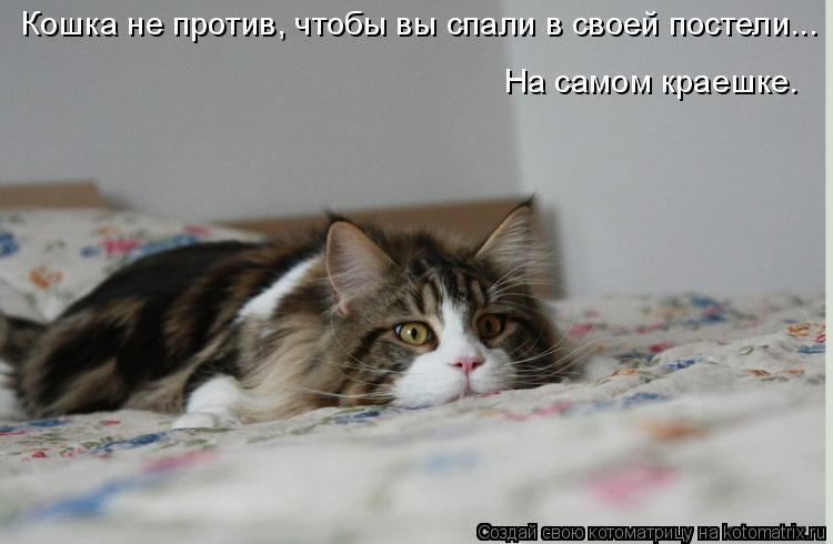 Котоматрица: Кошка не против, чтобы вы спали в своей постели... На самом краешке.
