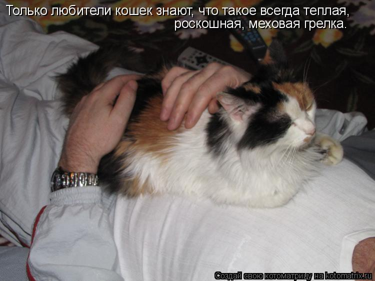 Котоматрица: Только любители кошек знают, что такое всегда теплая,  роскошная, меховая грелка.