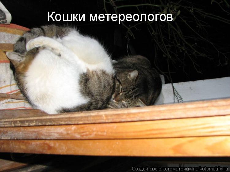 Котоматрица: Кошки метереологов