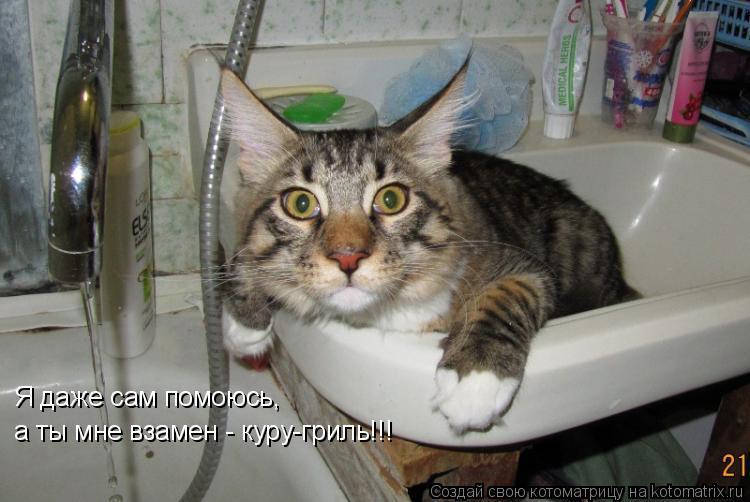 Котоматрица: Я даже сам помоюсь, а ты мне взамен - куру-гриль!!!