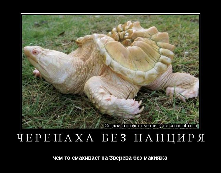 Котоматрица: Черепаха без панциря чем то смахивает на Зверева без макияжа