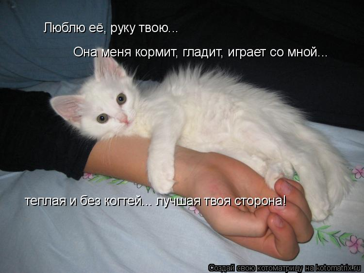 Котоматрица: Люблю её, руку твою... Она меня кормит, гладит, играет со мной... теплая и без когтей... лучшая твоя сторона!