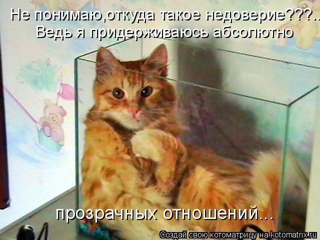 Котоматрица: Не понимаю,откуда такое недоверие???... Ведь я придерживаюсь абсолютно прозрачных отношений...