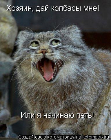 Котоматрица: Хозяин, дай колбасы мне! Или я начинаю петь!