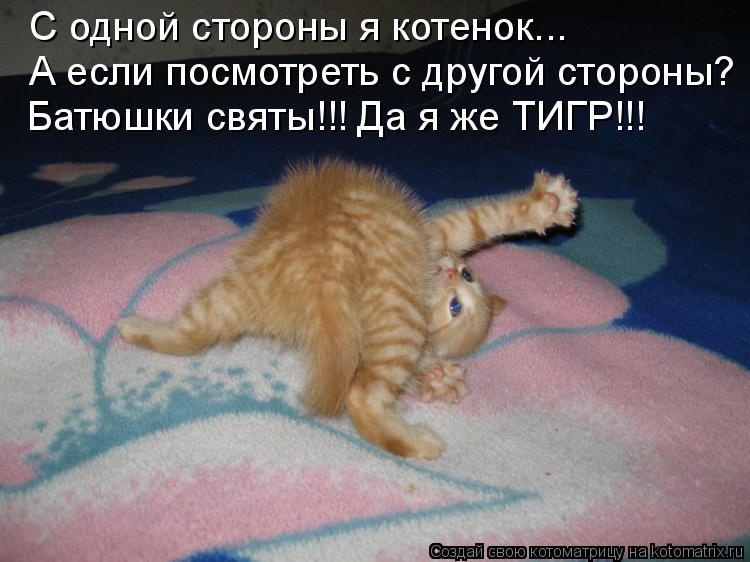 Котоматрица: С одной стороны я котенок... А если посмотреть с другой стороны? Батюшки святы!!! Да я же ТИГР!!!