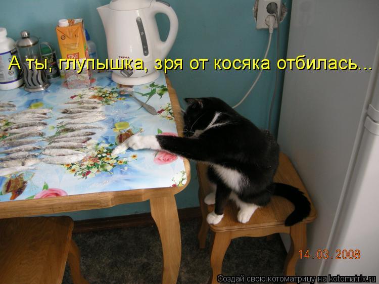 Котоматрица: А ты, глупышка, зря от косяка отбилась...