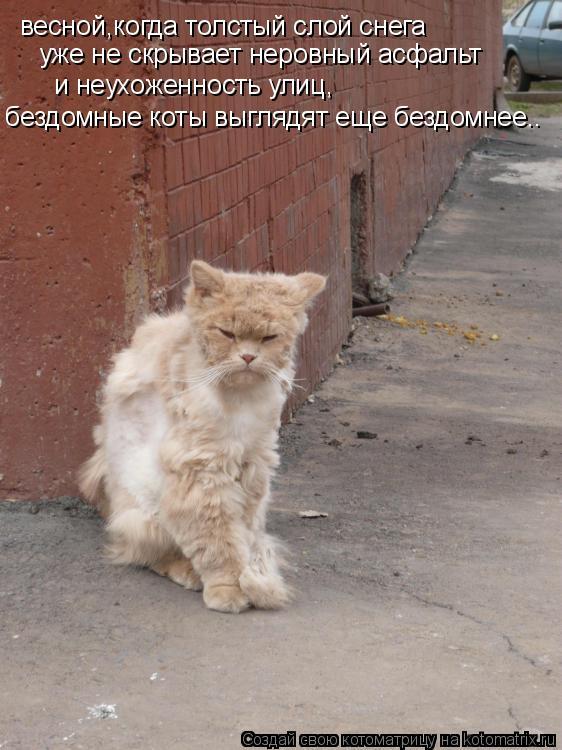 Котоматрица: весной,когда толстый слой снега  уже не скрывает неровный асфальт и неухоженность улиц, бездомные коты выглядят еще бездомнее..