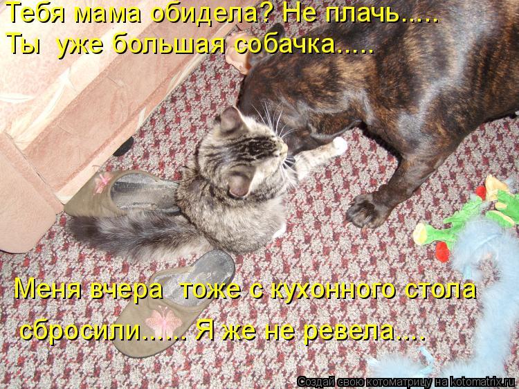 Котоматрица: Меня вчера  тоже с кухонного стола   сбросили...... Я же не ревела…... Тебя мама обидела? Не плачь….... Ты  уже большая собачка…....