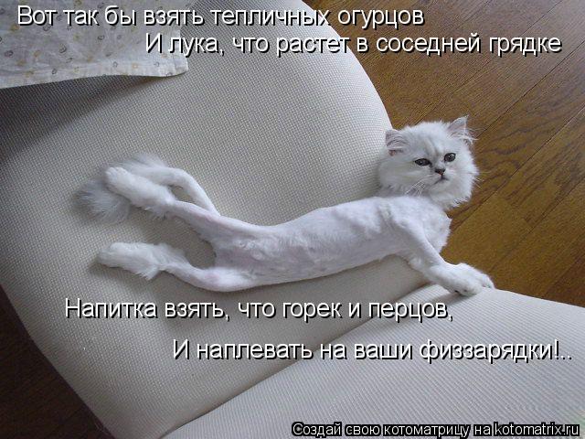 Котоматрица: Вот так бы взять тепличных огурцов И лука, что растет в соседней грядке Напитка взять, что горек и перцов, И наплевать на ваши физзарядки!..