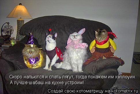 Котоматрица: Скоро напьются и спать лягут, тогда покажем им хэллоуин. А лучше шабаш на кухне устроим!