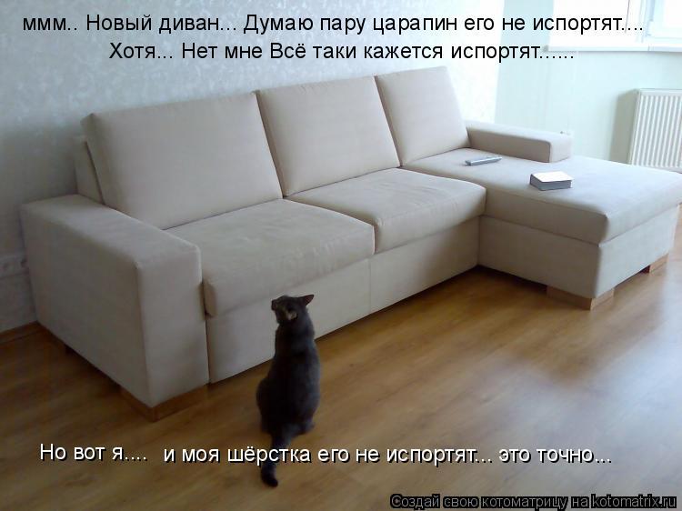 Котоматрица: ммм.. Новый диван... Думаю пару царапин его не испортят.... Хотя... Нет мне Всё таки кажется испортят...... Но вот я.... и моя шёрстка его не испортят
