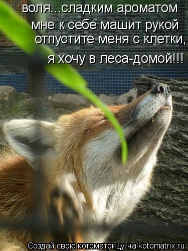 Котоматрица: воля...сладким ароматом  мне к себе машит рукой отпустите меня с клетки, я хочу в леса-домой!!!