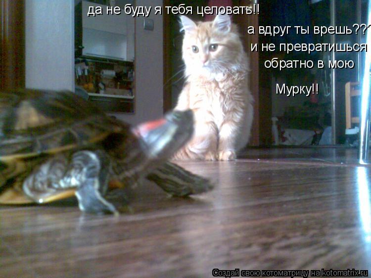 Котоматрица: да не буду я тебя целовать!! а вдруг ты врешь??? и не превратишься  обратно в мою Мурку!!