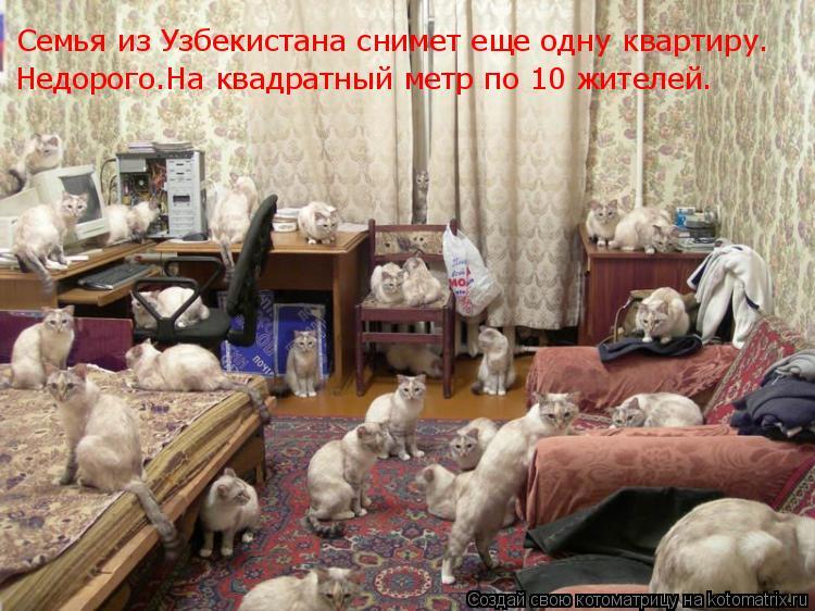 Котоматрица: Семья из Узбекистана снимет еще одну квартиру Семья из Узбекистана снимет еще одну квартиру. Недорого.На квадратный метр по 10 жителей.