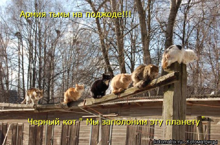 """Котоматрица: Армия тьмы на поджоде!!! Черный кот """" Мы заполоним эту планету """""""
