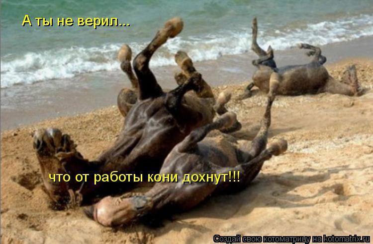 Котоматрица: А ты не верил... что от работы кони дохнут!!!