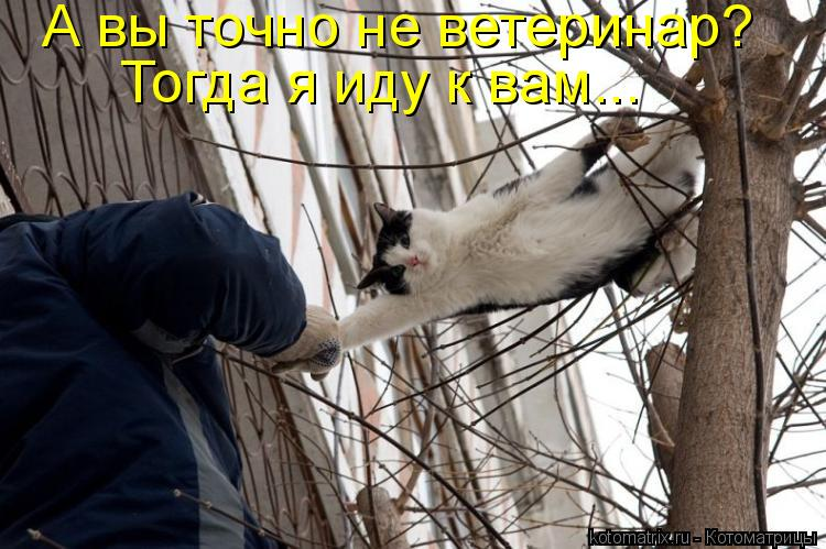 Котоматрица: А вы точно не ветеринар?  Тогда я иду к вам...