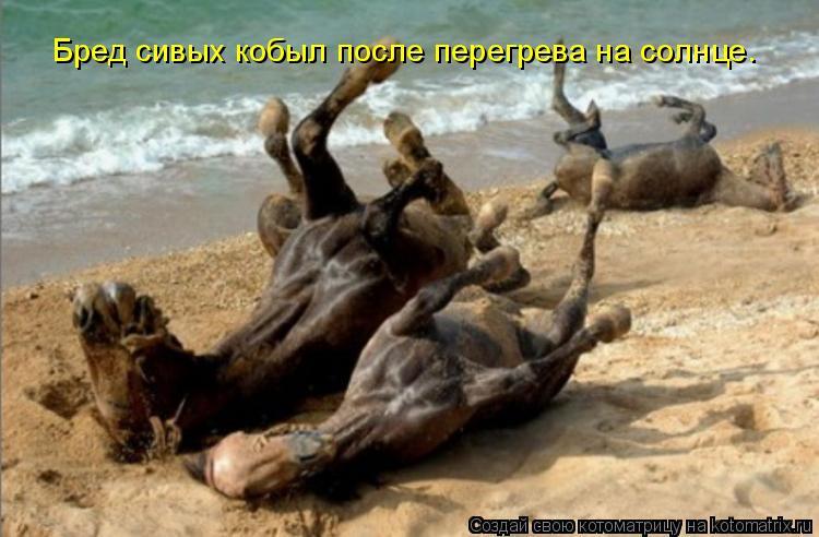 Котоматрица: Бред сивых кобыл после перегрева на солнце.