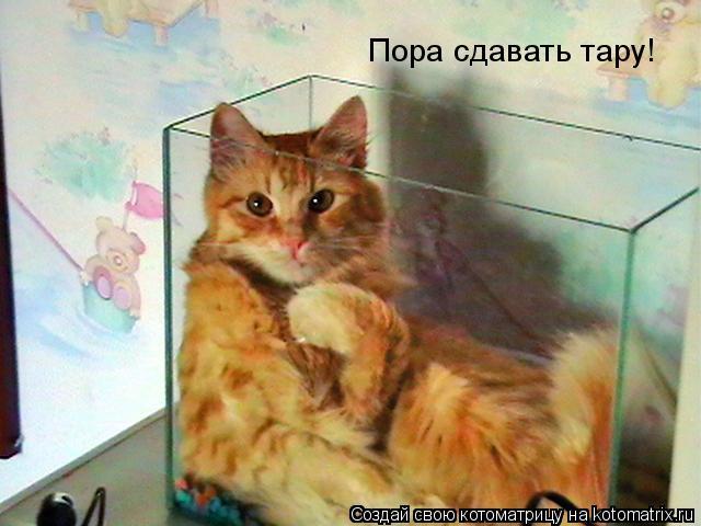 Котоматрица: Пора сдавать тару!