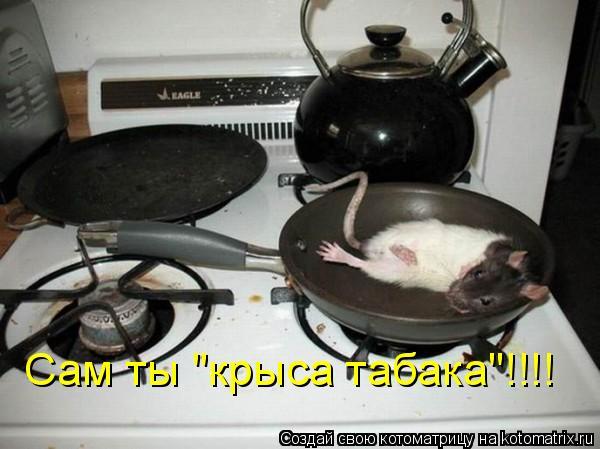"""Котоматрица: Сам ты """"крыса табака""""!!!!"""