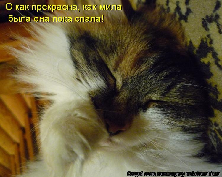 Котоматрица: О как прекрасна, как мила была она пока спала!