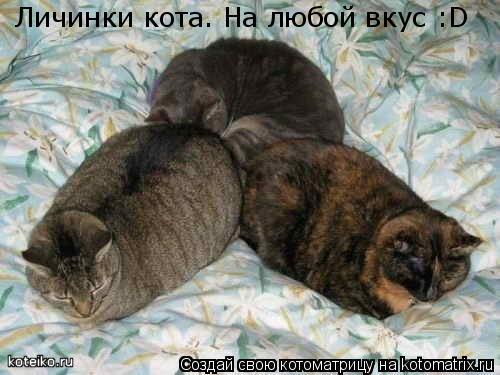 Котоматрица: Личинки кота. На любой вкус :D