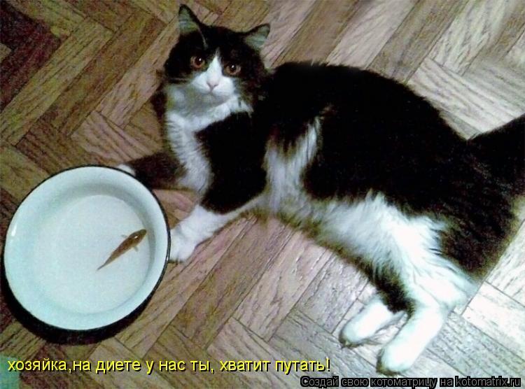 Котоматрица: хозяйка,на диете у нас ты, хватит путать!
