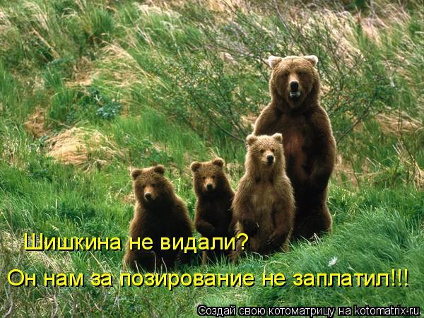 Котоматрица: Шишкина не видали? Он нам за позирование не заплатил!!!
